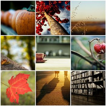 Fall Favorites Mosaic by Blessed Road Photography