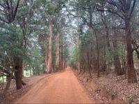 Beautiful Western Australian trees