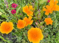 Flower meadow  IV