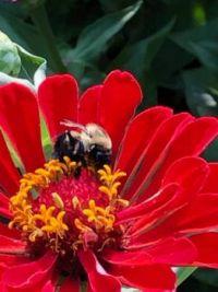 Zennia and Bee