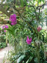 Orchids greenhouse/Selby Gardens: Dec 26, 2017