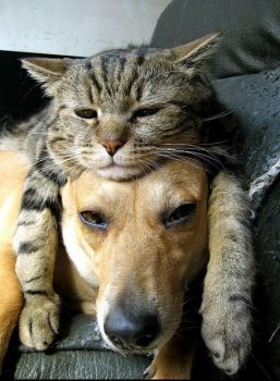 Lazy Cat and Dog
