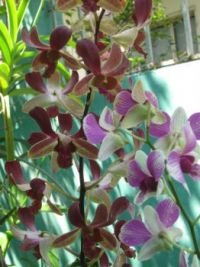 orchids 3 small