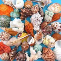Natural-Beach-Sea-Shells