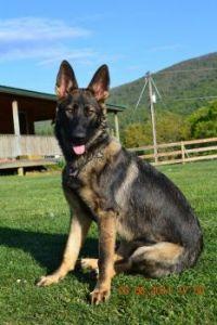 Sheila's Dog