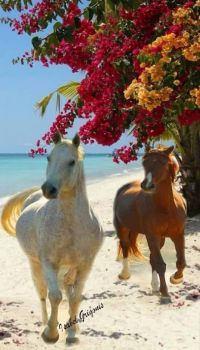 Two Horses Walking on the Beach