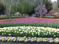 Tulip Top Gardens Canberra