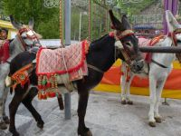 DONKEYS, MIJAS, SPAIN