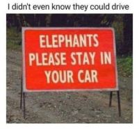 elephant trivia?