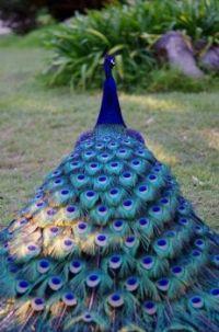 Ptačí noblesa