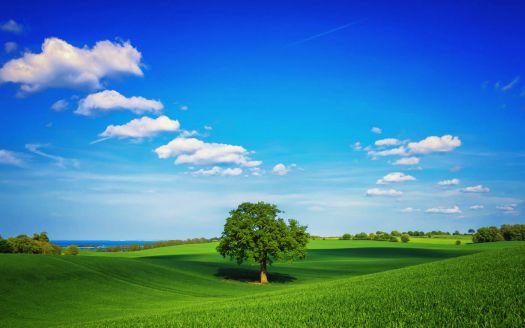 Ideal-landscape
