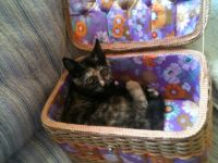Miss Marbles in the sewing box
