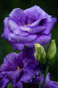 Gorgeous blossum
