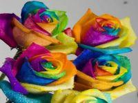 Strange Roses!!!