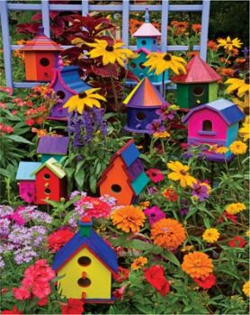 A VERY colorful yard!