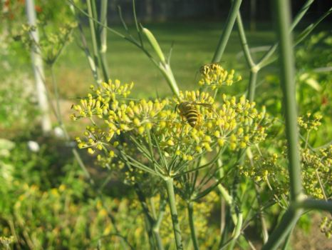Bronze Fennel and friends