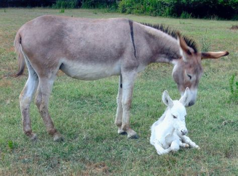 Donkey and Baby