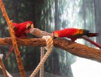 two pretty parrots
