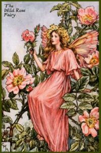 The Wild Rose Fairy (mini)