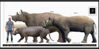 Uintatherium and relatives