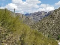 Looking into Sabino Canyon north of Tucson in the Catalina Mountains