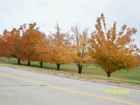 The trees by the Fish Hatchery at Chesapeake, MO