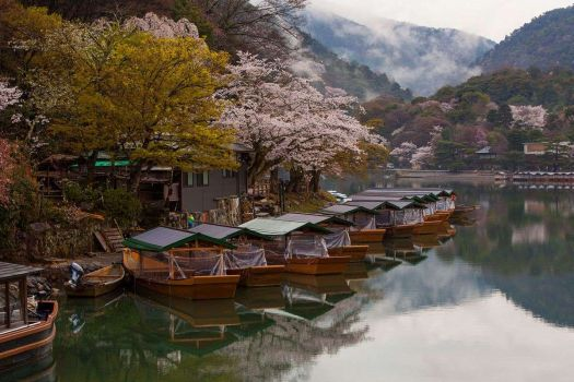 Cherry Blossoms along the Katsura River in Japan