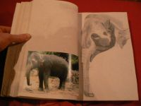 My photo and art - indian elephant