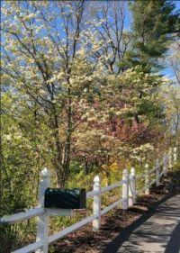 Spring in Massachusetts