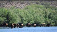 Salt River Horses 2018.