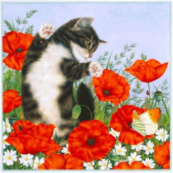 Cat and poppies