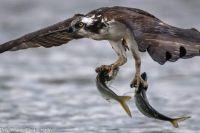 Double catch