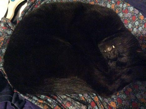 Vampire cat!