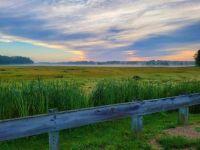 Mist on the marsh--medium