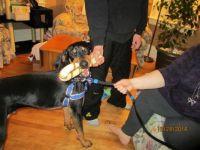 Grand-dog Marlow