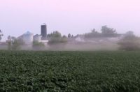 Farm enshrouded with fog.