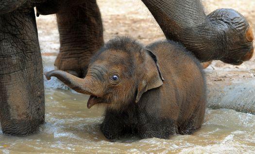Theme: Wild Animals (first ever bath?)