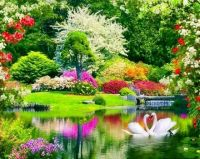 Beautiful Grounds With Two Swans
