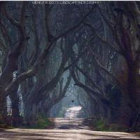 Country Lane,Michele Rossetti