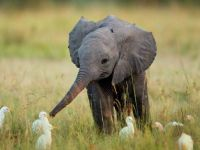 Baby Elephant and Friends