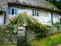 thatched cottage with roses