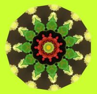 051918 Kaleidoscope