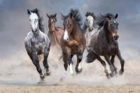 Horses running from the Storm
