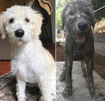 Before and after the mudbath