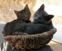 a basket of cats