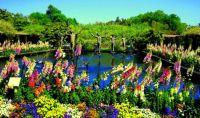 Amazing gardens (11)