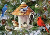 Winter Birds and Evergreens