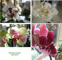 Collage of my birthday Orchids (close up)