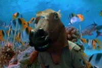 Horse Mask!