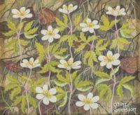 Stina Sunesson, Wood Anemone